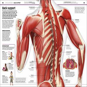 Knowledge Encyclopaedia Human Body